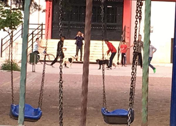 1 3386 - Okul bahçesinde köpek dövüştürdüler