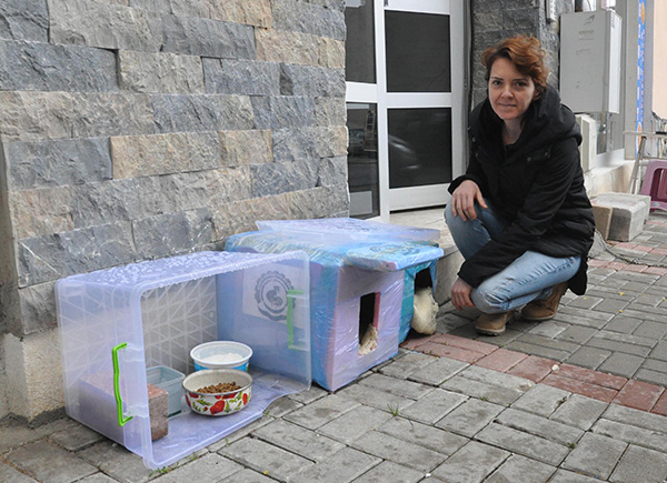 1 783 - 'Kedi evi' yüzünden 4 kadın tartıştı