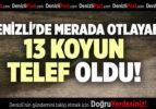 DENİZLİ'DE MERADA OTLAYAN 13 KOYUN TELEF OLDU
