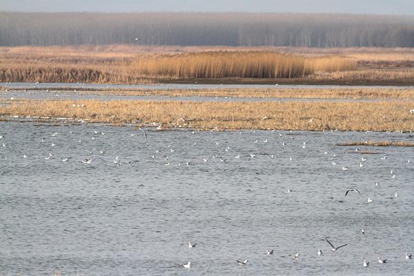 2 1797 - Denizli Göllerinde Kuş Sayısı Yarı Yarıya Azaldı