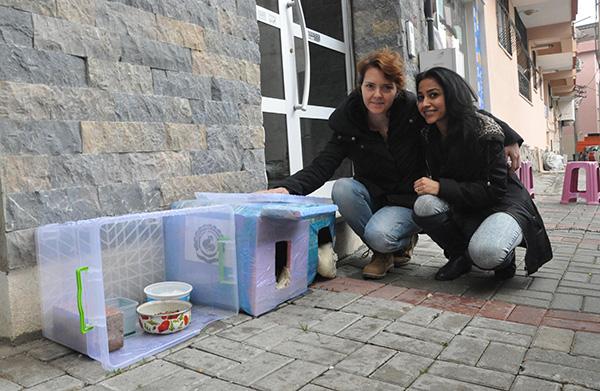 2 403 - 'Kedi evi' yüzünden 4 kadın tartıştı