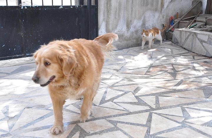 3 218 - Sokak hayvanlarının annesi oldu