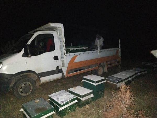300 bin liralik ari kovani hirsizlari yakalandi 4957 dhaphoto3 - 300 bin liralık arı kovanı hırsızları yakalandı