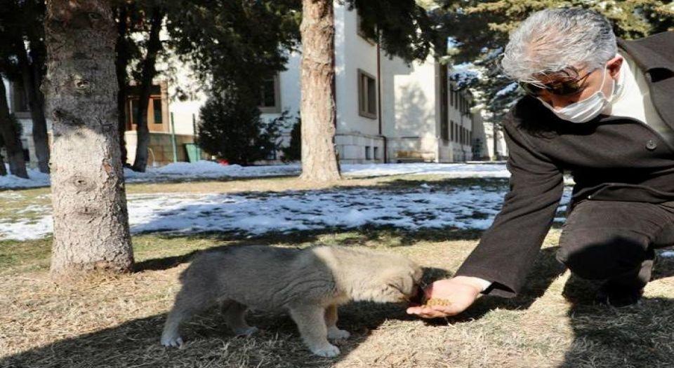 Erzincan'da 'bir kap sevgi' yemi