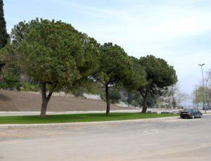 Kocaeli Darıca sahil parkına çevre düzenlemesi
