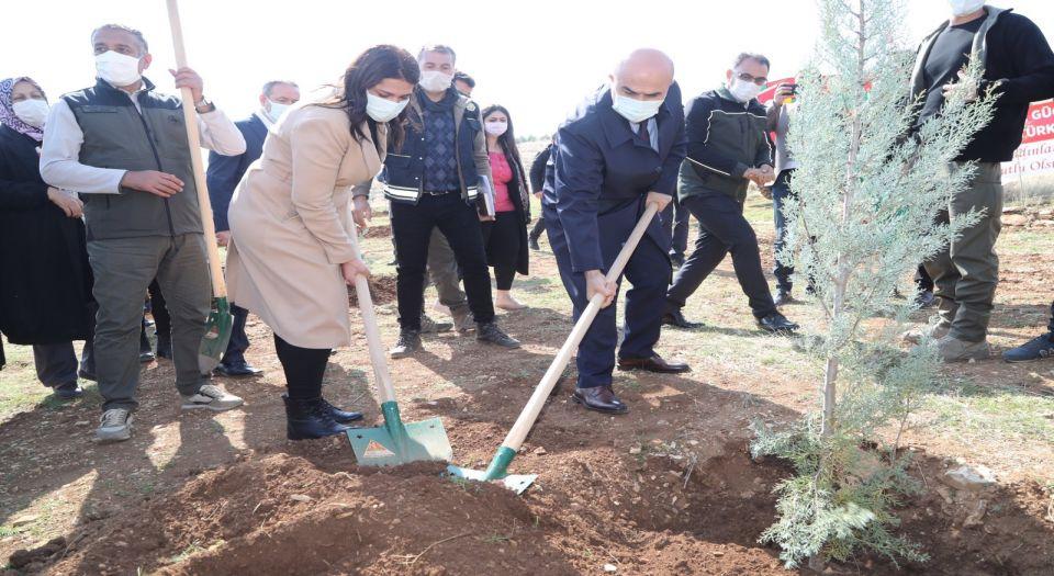 Mardin'de Mercan Hatıra Ormanı'nda findanlar toprakla buluştu