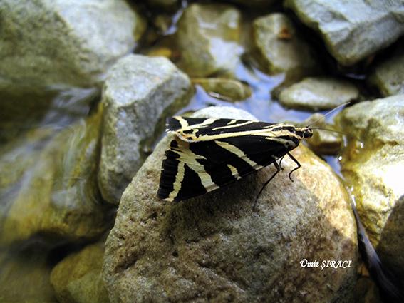 IMG 0866 1 - Altın Mahseni Çivril Akdağ Tokalı Kanyonu