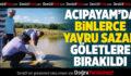 Acıpayam'da Binlerce Yavru Sazan Göletlere Bırakıldı