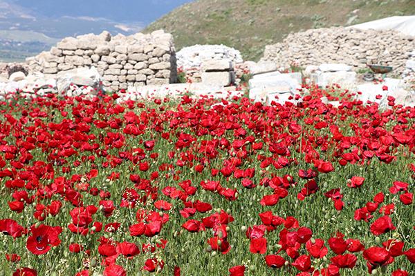 antik kent laodikya kir cicekleriyle rengarenk  9569 dhaphoto5 - Antik Kent Laodikya, kır çiçekleriyle rengarenk