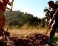 Çameli'de Fidanlar Toprakla Buluştu