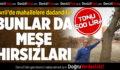 Çivril'de Meşe Hırsızları Mahalleliyi Bezdirdi