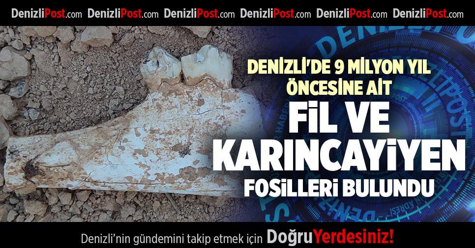 DENİZLİ'DE 9 MİLYON YIL ÖNCESİNE AİT FİL VE KARINCAYİYEN FOSİLLERİ BULUNDU