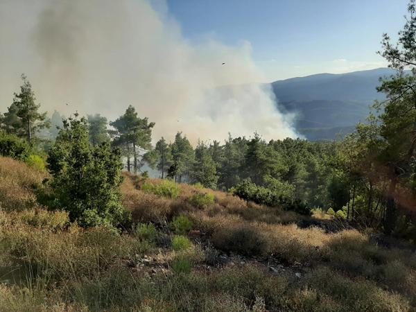 denizlide orman yangini 1732 dhaphoto2 - Denizli'de orman yangını