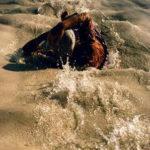 eski pamukkale fotograflari 4 150x150 - Pamukkale 80'li Yıllarda Böyleydi