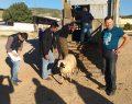 Genç Çiftçilere Hibe Küçükbaş Hayvan