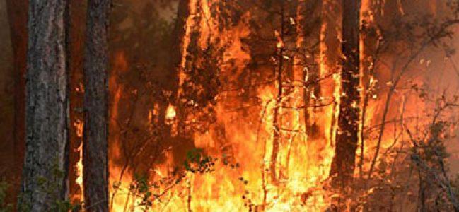 Alevler, Güney'de 15 Hektar Ormanı Kül Etti