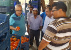 Katar'a, Çameli domatesi