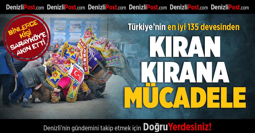 Türkiye'nin En İyi 135 Devesinden Kıran Kırana Mücadele