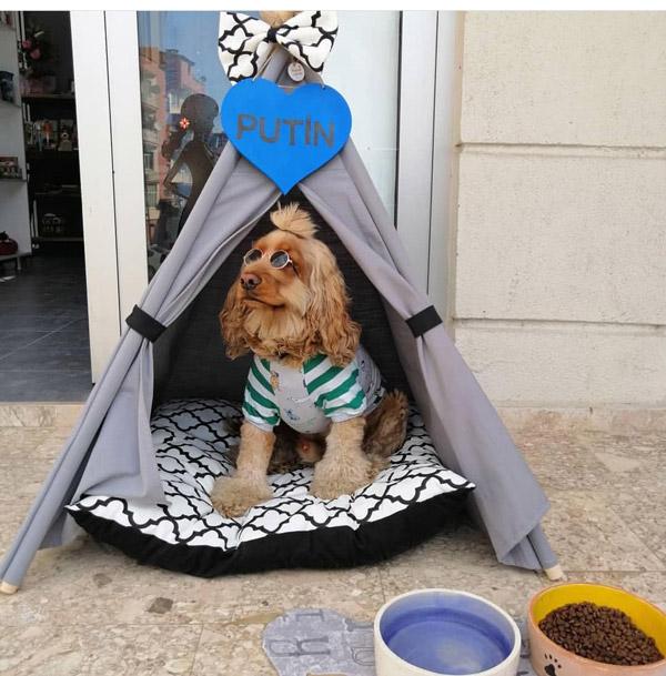 kopegi icin dogum gunu partisi duzenledi 2994 dhaphoto1 - Köpeği için doğum günü partisi düzenledi