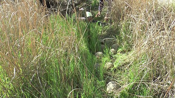 kuyuya atildigi sanilan 17 kaplumbagayi itfaiye kurtardi 9175 dhaphoto2 - Kuyuya atıldığı sanılan 17 kaplumbağayı itfaiye kurtardı