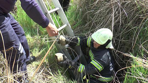 kuyuya atildigi sanilan 17 kaplumbagayi itfaiye kurtardi 9175 dhaphoto4 - Kuyuya atıldığı sanılan 17 kaplumbağayı itfaiye kurtardı