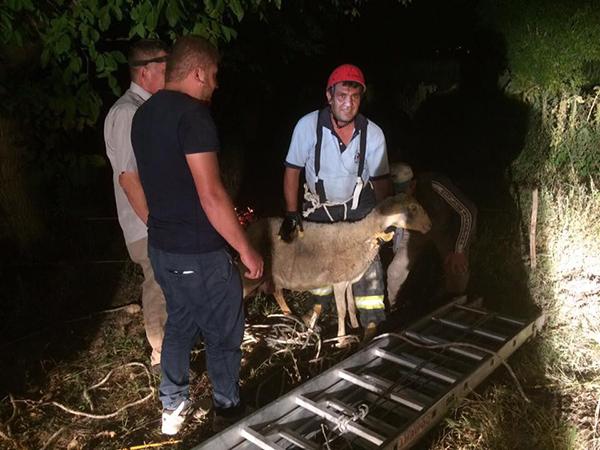 kuyuya dusen koyunu itfaiye kurtardi 9965 dhaphoto1 - Kuyuya düşen koyunu, itfaiye kurtardı