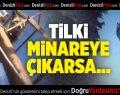 Tilki minaredeki hoparlör kablolarına zarar verdi