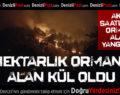 Denizli'de 2 hektarlık ormanlık alan yandı