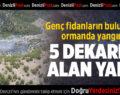 Genç fidanların bulunduğu ormanda 5 dekarlık alan yandı
