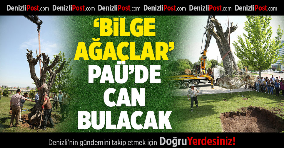 """Bilge Ağaçlar"" PAÜ'de Can Bulacak"