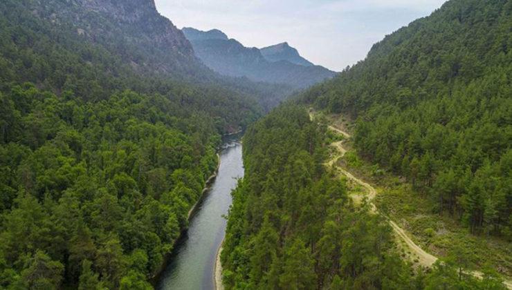 Muğla Sığla Ormanları'nın korunacak alanları yeniden belirlendi