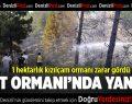 Denizli'de orman yangını korkuttu