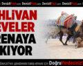 Pehlivan Develer Yarın Sarayköy Arenasında Buluşuyor