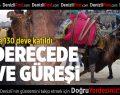 Sarayköy'de -2 derecede deve güreşi keyfi