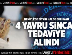DENİZLİ'DE BİTKİN HALDE BULUNAN 4 YAVRU SİNCAP TEDAVİYE ALINDI