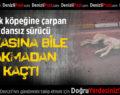 Sokak Köpeğine Çarptı Arkasına Bile Bakmadan Kaçtı