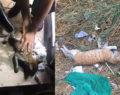 Esnafın selde bulup kurtarmaya çalıştığı kedi öldü