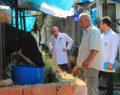 Pamukkale Belediyesi'nden Hayvancılığa Destek