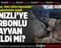 CHP'li Sancar, İthal Edilen Hastalıklı Hayvanları TBMM Gündemine Taşıdı