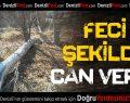 Üzerine ağaç devrilen çiftçi öldü