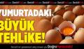 Yumurtadaki Büyük Tehlike!